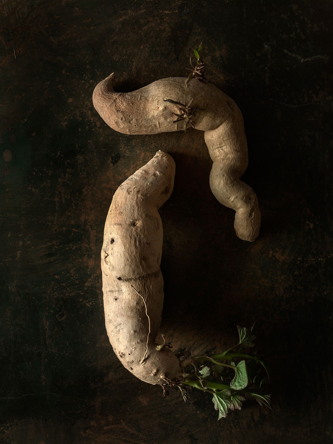 Roots_Series-4-small-potatoes-29848-as-Smart-Object-1